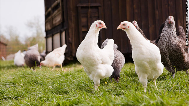 With more people keeping chickens in urban and suburban areas, trained chicken sitters are in demand and available.