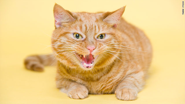 Petting your cat can cause an unpleasant feeling, like a shock from static electricity -- and they bite to let you know.