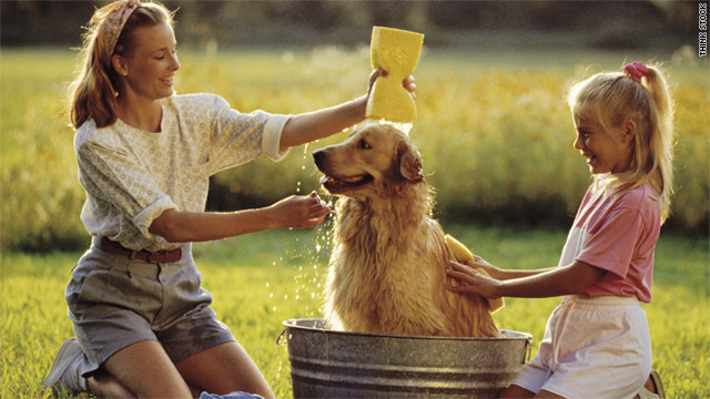 Regular grooming keeps pets healthy and reduces expenses over time.