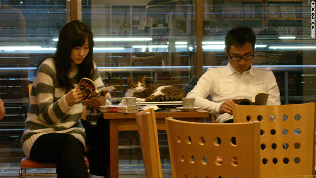 Couples come to cat cafés to relax with feline friends.