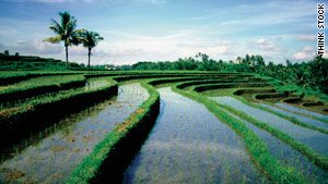 Tiered rice paddies provide soothing scenery throughout Bali.