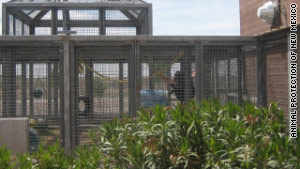The chimpanzees will remain housed at the Alamogordo Primate Facility in Alamogordo, New Mexico.