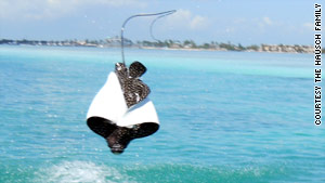 Before Jenny Hausch was hit by a ray, she had been taking pictures of eagle rays flying through the air.