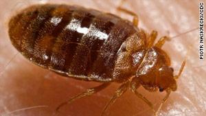 Дезинсекция - Уничтожение клопов Клопы - отряд насекомых, полужесткокрылые (Heteroptera, или Hemiptera).
