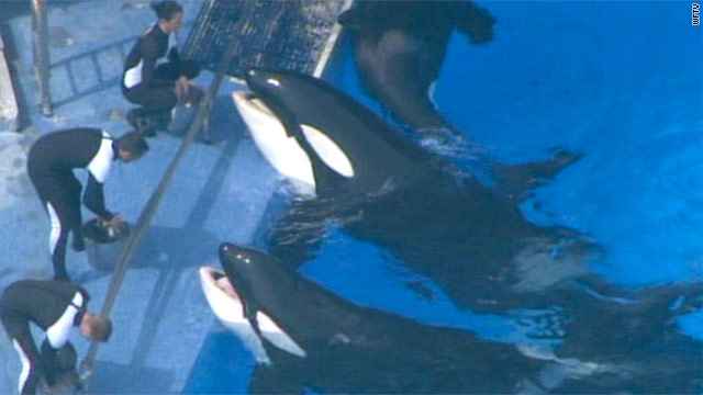Killer whale Tilikum is making its first appearance before audiences since killing SeaWorld trainer Dawn Brancheau last year.