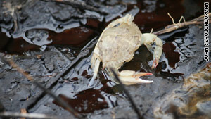 The exoskeleton of a dead crab is a common site here. Living crabs are much harder to find.