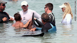 Rescue groups and volunteers work to save a group of stranded pilot whales off Cudjoe Key, Florida, on Friday.