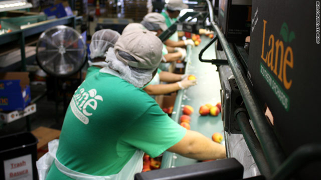 To find workers to pick, pack and ship peaches, Lane Packing participates in a U.S. Department of Labor guest worker program.