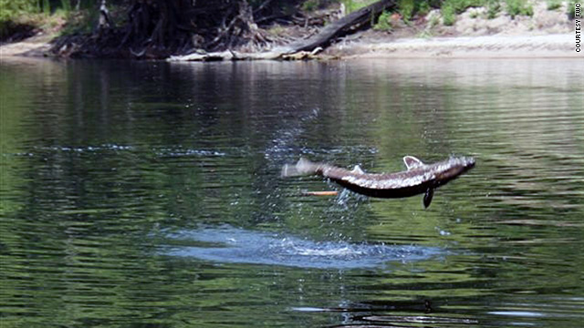 "A sturgeon is ""like an alligator on the outside of their skin,"" FWC officer Dorvan Daniel says."