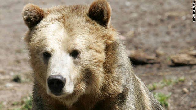 There are more than 600 bears in Yellowstone National Park ecosystem, according to park officials.