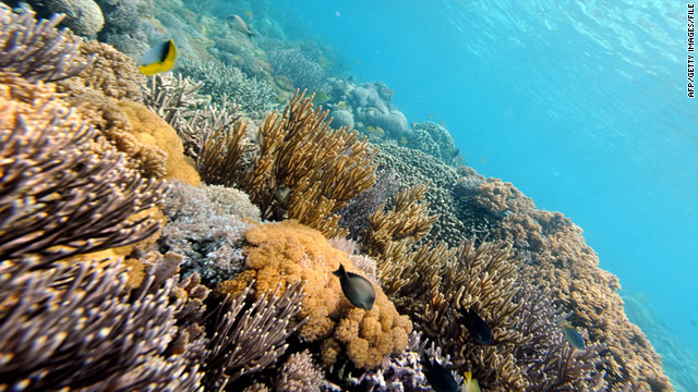 The study found that many marine animals like corals are most at risk from ocean acidification.