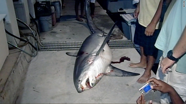 Jason Fox caught this 650-pound, 13-foot-long shark after two hours of fighting to reel it in.