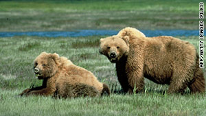 Only about 1,000 grizzlies remain in the continental U.S., according to the National Geographic Society.