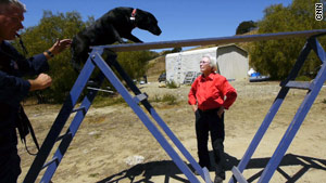 Wilma Melville says search dogs must have drive, focus and high energy.
