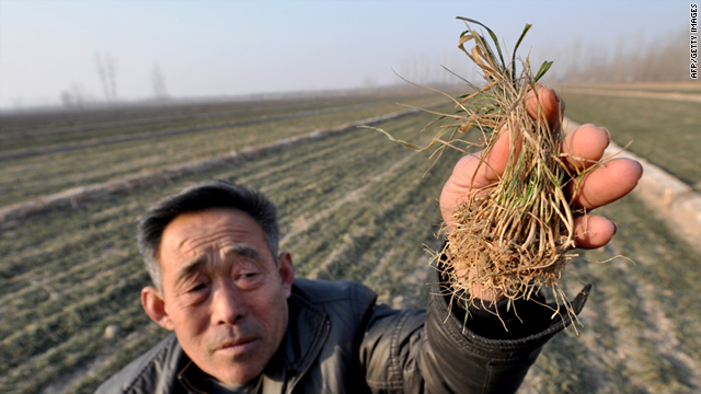 This picture taken on January 28, 2011 shows a Chinese farmer holding dried vegetable seedlings at his drought-striken fields in Zhouping, east China's Shandong province.