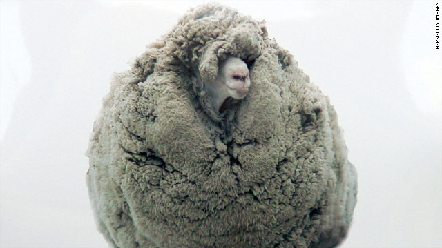 Shrek the sheep's long-awaited shearing was broadcast live on television in New Zealand.