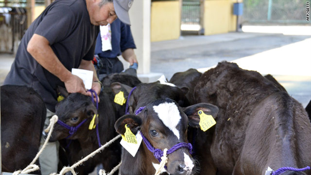 Calves are prepared after arriving at a dairy cattle market to be put up for auction in Fukushima prefecture on July 14.