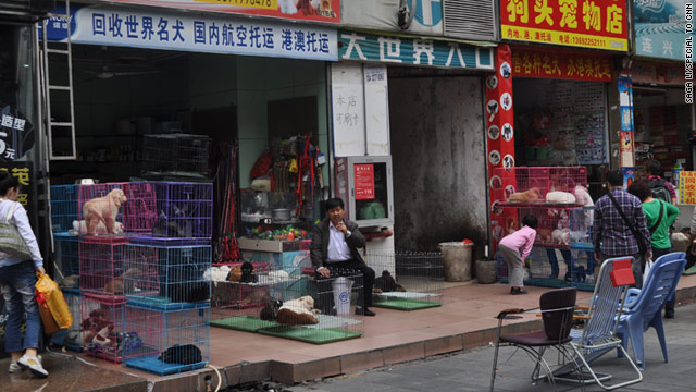 Dog is still on the menu in south China, but dog ownership has exploded with Shenzhen's fortunes, as seen by its pet stores.
