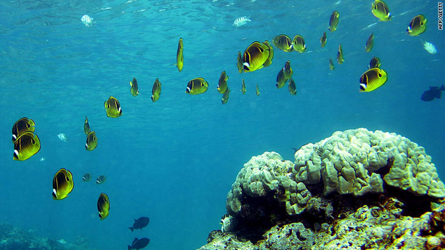 A coral reef in Honolulu, Hawaii -- we face losing entire marine ecosystems, such as coral reefs, within a single generation.