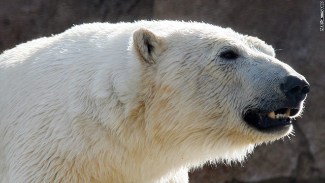 The polar bear was shot dead following the attack, on the Von Postbreen glacier in the Norwegian Arctic.