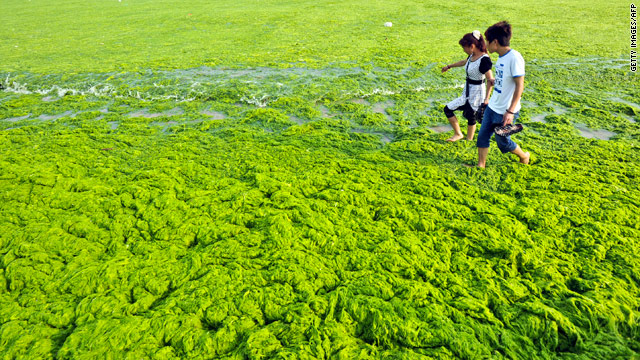 Massive algae bloom on China coastline