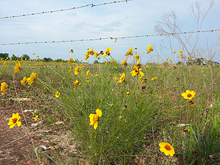 Flowers along South Air Depot Boulevard, near the end of the walk.