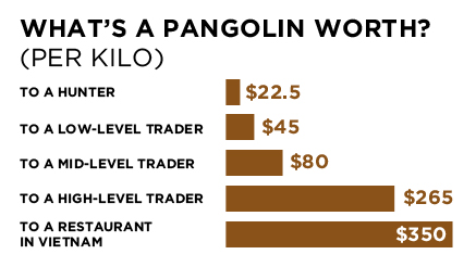 Displaying what is a pangolin worth.jpg