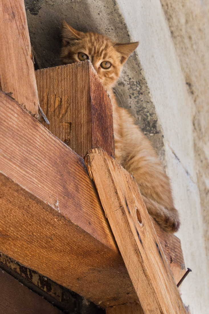 A kitten represents the only inhabitants left in Fossa, a small hamlet about 12 kilometers (7.5 miles) from L'Aquila.