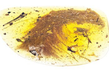 'Once in a lifetime find': Dinosaur tail discovered trapped in amber