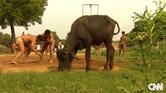 قرية هندية تخرج أجيالاً من أصحاب العضلات المفتولة
