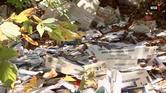 كاميرا توثق عامل بريد يرمي الطرود في الغابة