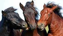 إحذرهذه المعتقدات الخاطئة الشائعة بين أصحاب الخيول