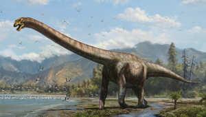 هيكل يكشف عن الديناصور