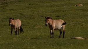 بالصور..للخيول مكانة كبيرة في أرض