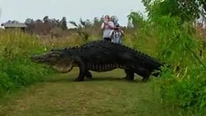 شاهد.. تمساح بحجم شاحنة يفاجئ مجموعة من السياح في فلوريدا