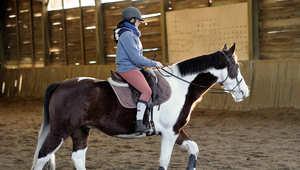 تفكر في شراء حصان للمرة الأولى؟ إليك أهم الأمور التي يجب مراعاتها