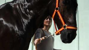 """لقطات من  مهرجان الخيول الدولي """"SICAB"""" في أسبانيا"""