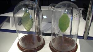 ورقة بلاستيكية تنتج الأوكسجين..ومبان من بلاستيك قريباً في عالمنا