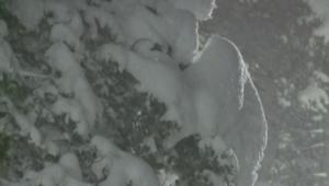 كاليفورنيا عيد ميلاد أبيض وفرصة للتزلج