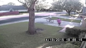 بالفيديو.. أب يسترجع دراجة ابنته من لص.. وتمساح يتجول بحديقة منزل