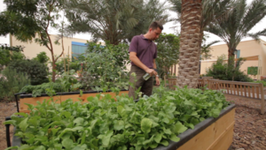 كيف تزرع خضارك وفاكهتك بنفسك في الصحراء؟
