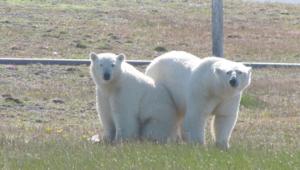 علماء بمركز أبحاث في القطب الشمالي ضحية لحصار