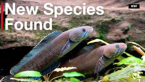 اكتشاف أكثر من 200 صنف من الحيوانات في الهملايا
