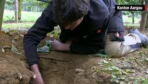 مزارع يجد أكثر من 4000 عملة رومانية تعود إلى 1700 عام