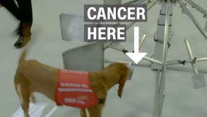 هل يمكن للكلاب أن تشم رائحة السرطان؟
