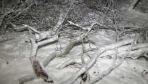 بالفيديو: سقوط جذوع شجرة يودي بحياة طفلة ورجل في ولاية أوهايو