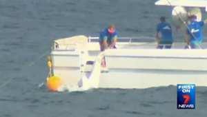 الإمساك بقرش بَبري بعدما علق بفخ بحري في أستراليا