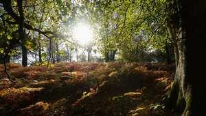 الطبيعة تتجلى في أحلى صورها في استقبال فصل الخريف ببريطانيا