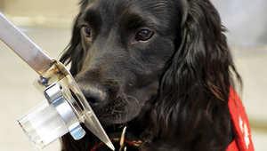 هل يمكن تطوير أجهزة مشابهة لأنوف الكلاب لـ