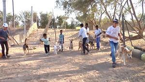 رغم الأوضاع الصعبة.. طبيب يكرّس وقته لإنقاذ وحماية الكلاب الضالة في غزة